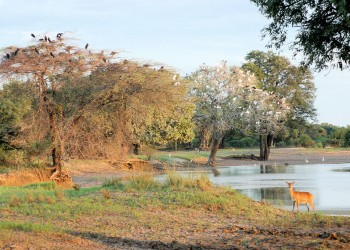 Národní park South Luangwa