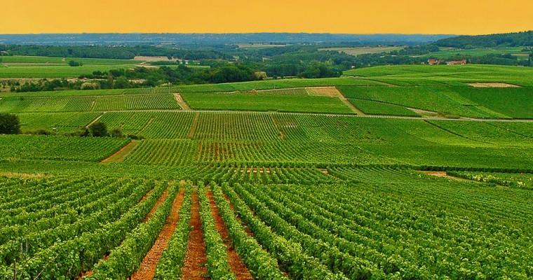 burgundské